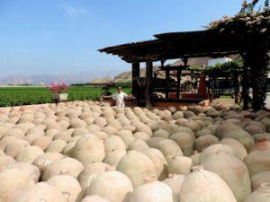 Peru Wine Tours Quierolo Winery
